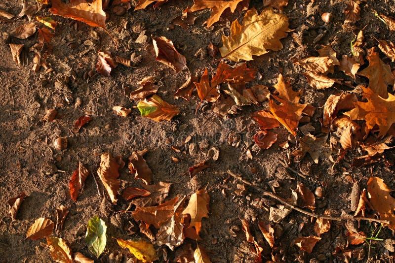 Tło kolorowi jesień liście na lasowej podłoga fotografia royalty free