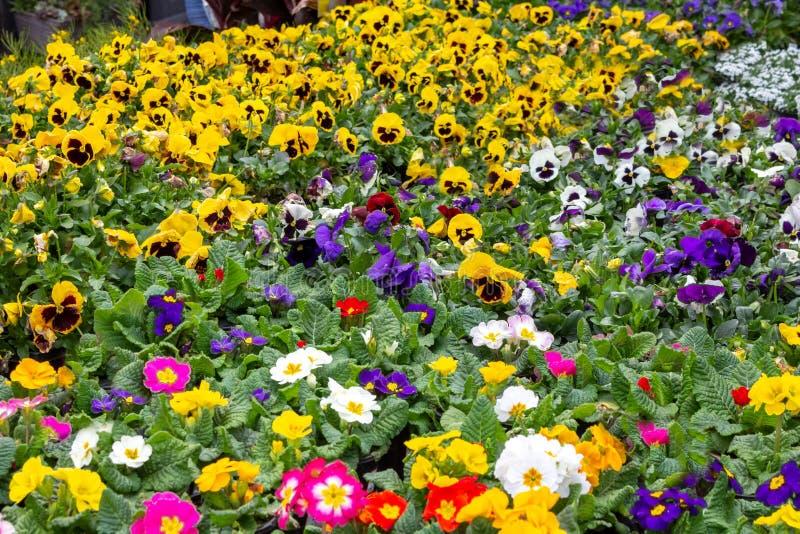 Tło kolorowi wiosna kwiaty obraz stock