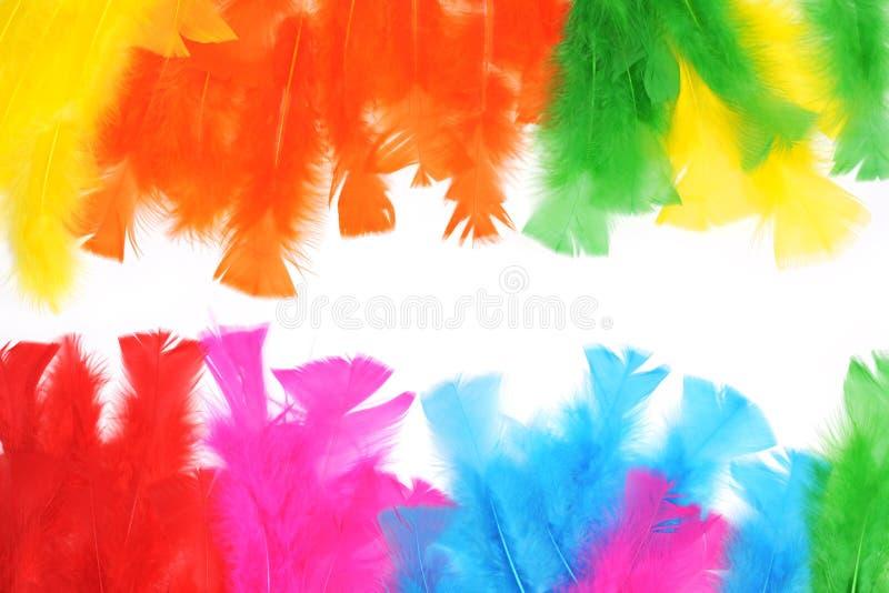 Tło kolorowych piór fotografia stock