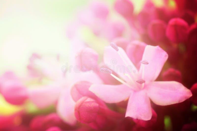 tło kwiat obraz stock