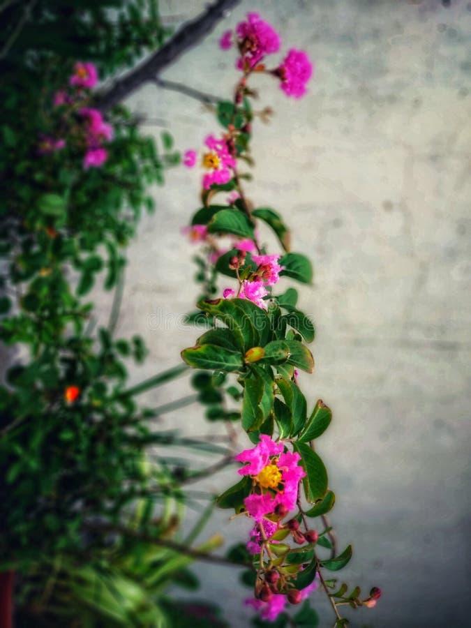 Tło kwiatowe obraz stock