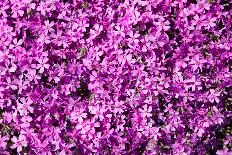 tło kwiaty zdjęcia royalty free