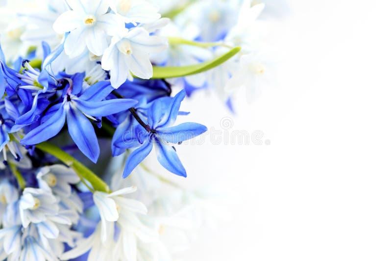 tło kwitnie wiosna fotografia royalty free