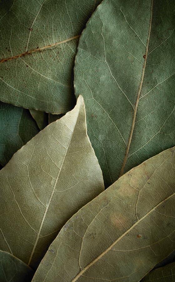 tło liść wysuszony laurowy zdjęcia royalty free