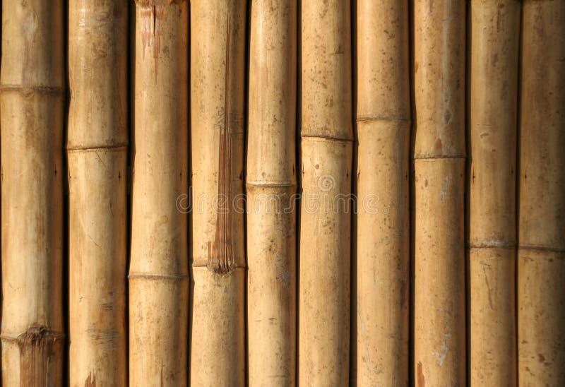 tło lokalnych Philippines styl bambusowy fotografia royalty free