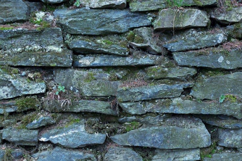 Tło lub tekstura Sucha Kamienna ściana Zakrywająca z liszajami obraz royalty free