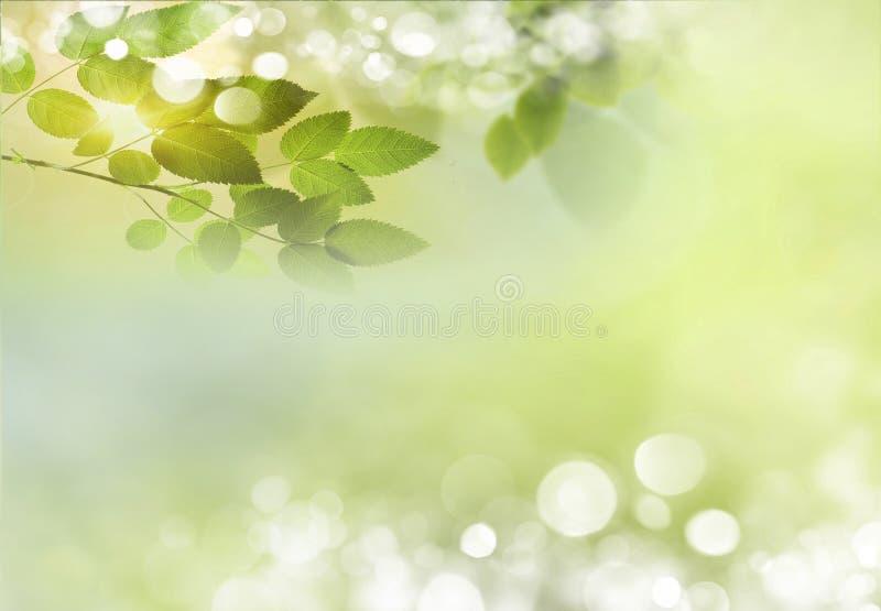 tło mleczy spring pełne meadow żółty obrazy stock