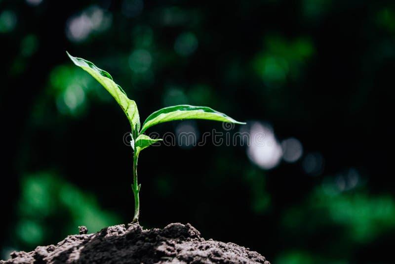 Tło natury liścia zielony drzewo zdjęcie stock