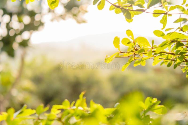 Tło natury liścia zielony drzewo zdjęcia royalty free