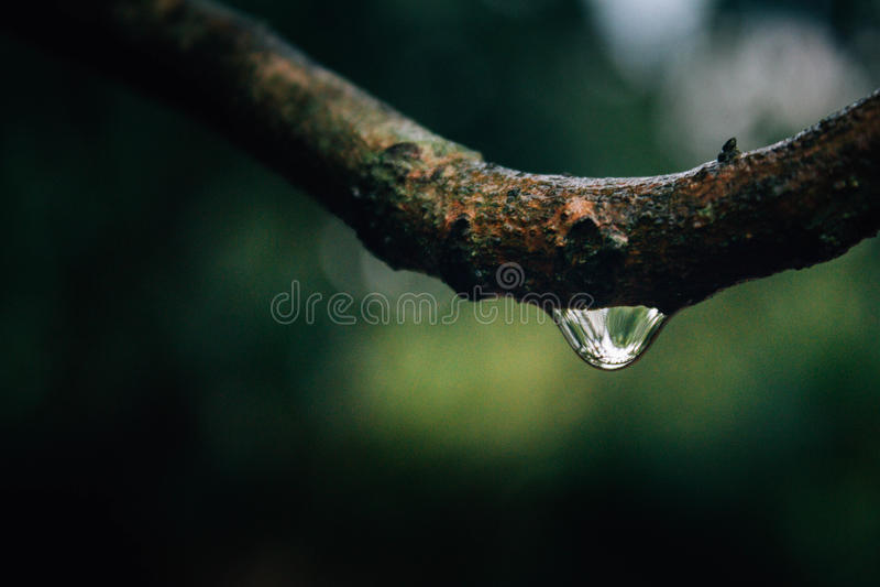 Tło natury liścia zielony drzewo obraz royalty free