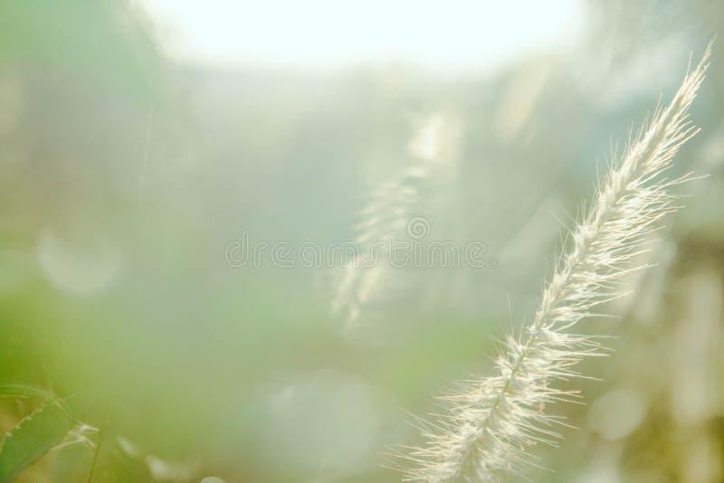 Tło natury liścia zielony drzewo obrazy stock