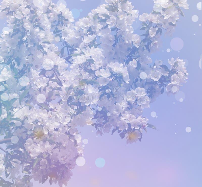 Tło od wiosen białych florets na gałąź fotografia stock