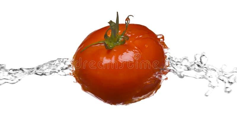 tło odizolowywający makro- czerwonego pluśnięcia pomidorowy biel fotografia royalty free