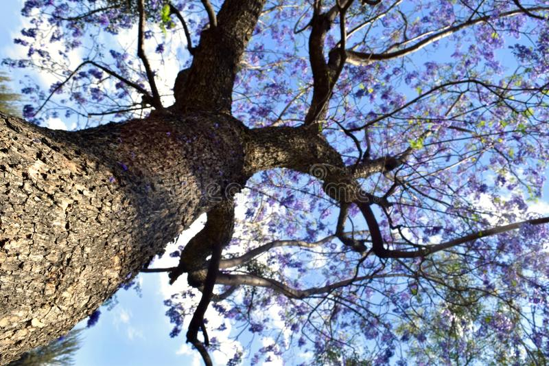 tło odosobnionej wiosny drzewny biel zdjęcie stock