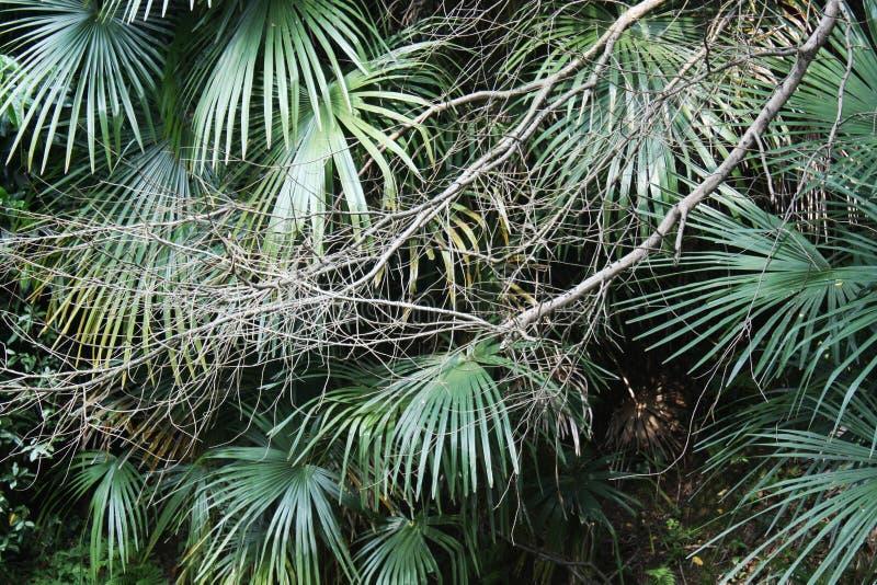 Tło palmy liście zdjęcie royalty free