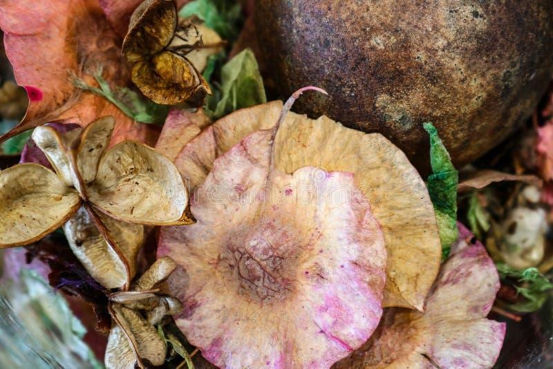 Tło piękny wysuszony potpourri z delikatnymi pastelami i ziemi brzmieniami - selekcyjna ostrość obraz stock