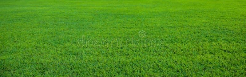 Tło piękny zielonej trawy wzór obrazy stock