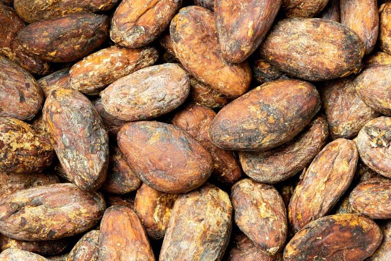 Tło piec unpeeled kakaowe fasole fotografia royalty free