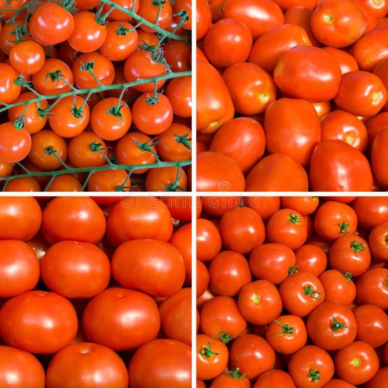 tło pomidor dojrzały ustalony fotografia royalty free