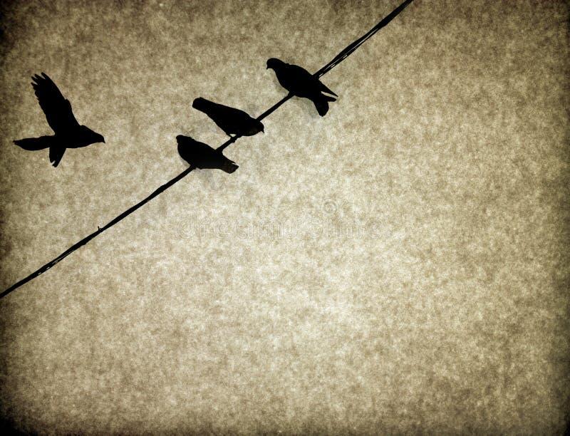 tło ptaków tekstury rocznik zdjęcie royalty free