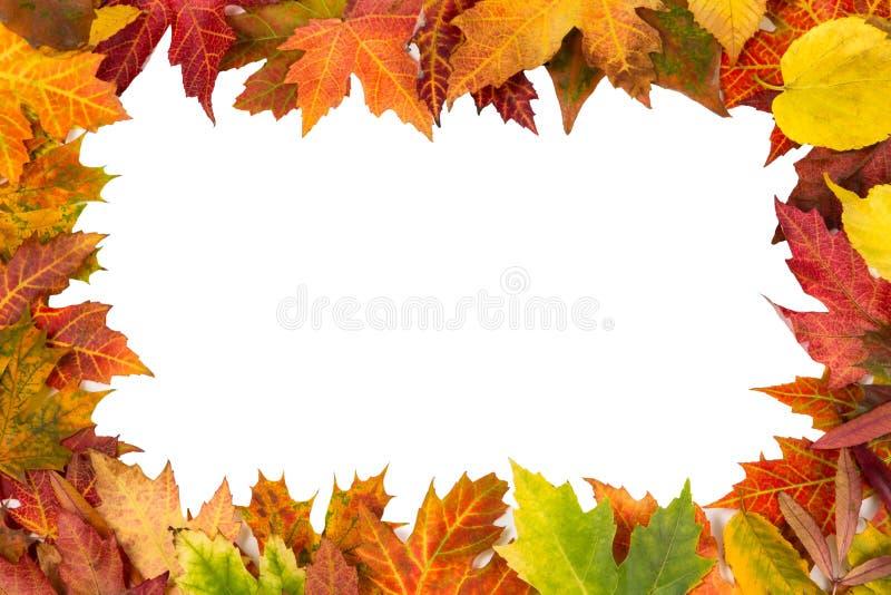 Tło rama odizolowywał kolorowego jesień liści przyjęcia weselnego ja obrazy royalty free