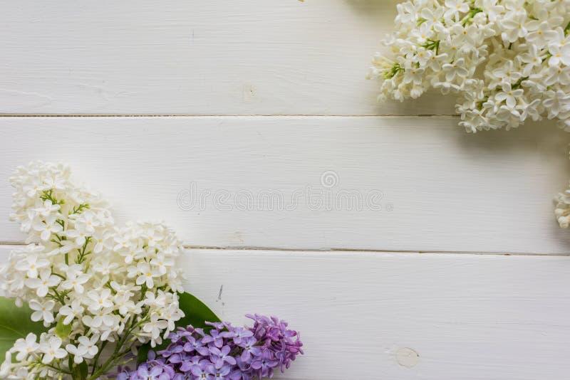 Tło, rama z gałąź bez w różnych kolorach, bez i purpury - biel, ilustracja wektor