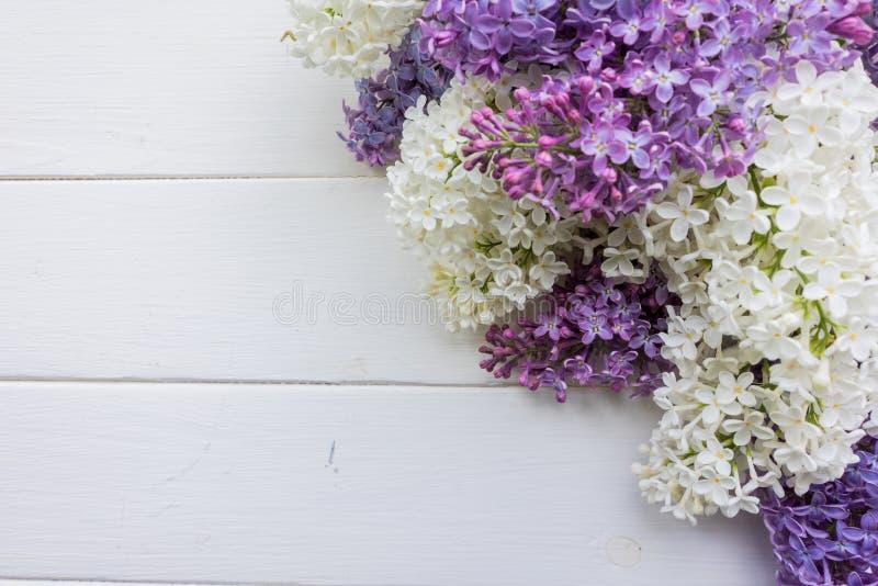 Tło, rama z gałąź bez w różnych kolorach, bez i purpury - biel, ilustracji