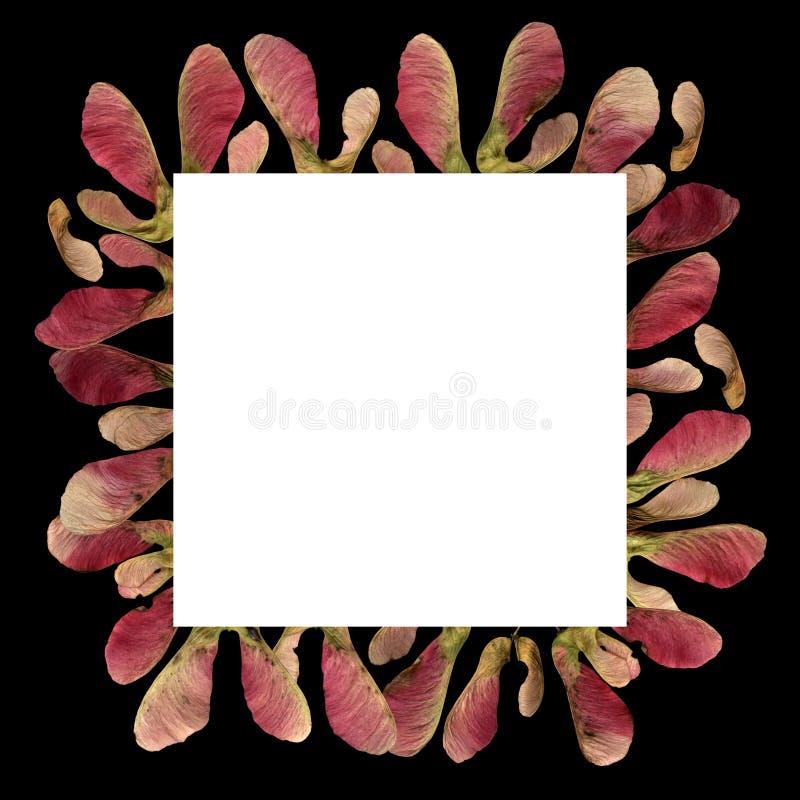 Tło ramki z różowym klonem zdjęcia stock