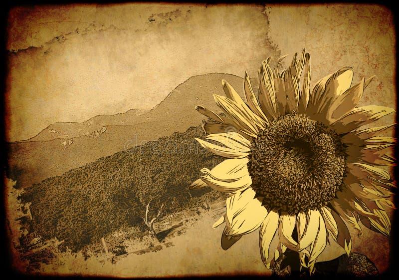 tło retro plakatu słonecznik ilustracji