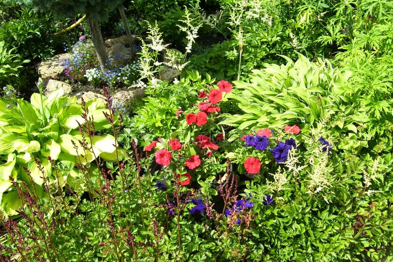 tło szczegółów tekstury okno stary drewniane Trawa i kwiaty zdjęcie royalty free