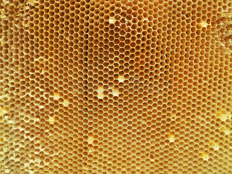 Tło sześciokąta tekstura, wosku honeycomb obrazy stock