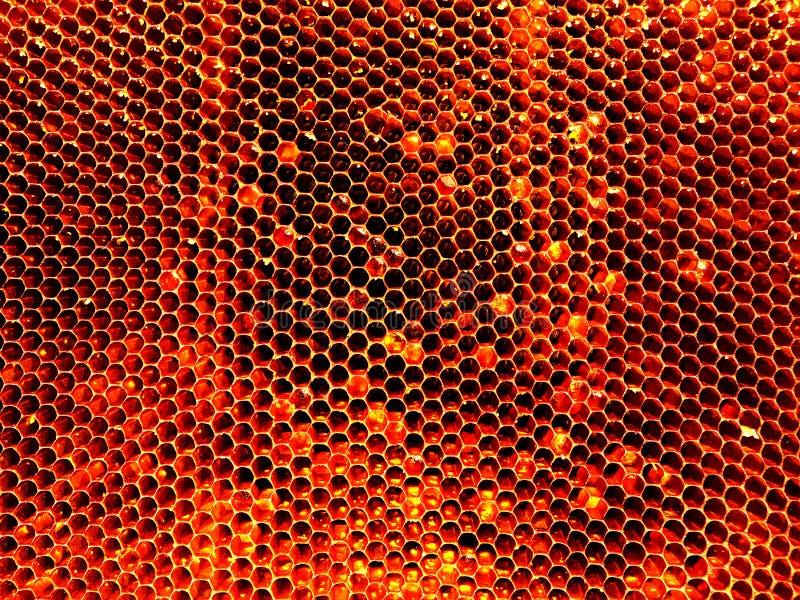 Tło sześciokąta tekstura, wosku honeycomb zdjęcie royalty free