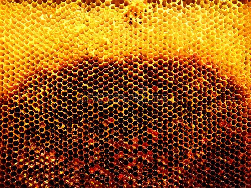 Tło sześciokąta tekstura, wosku honeycomb zdjęcia stock