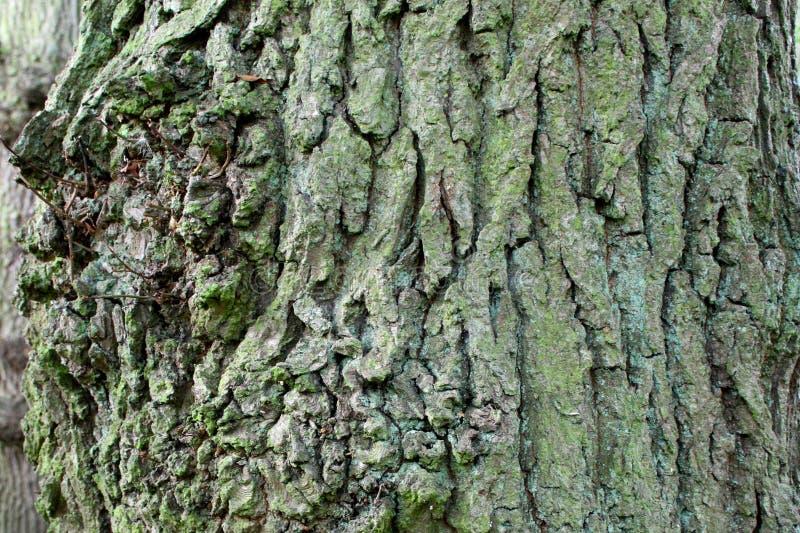 tło tekstura korowata naturalna zdjęcie royalty free