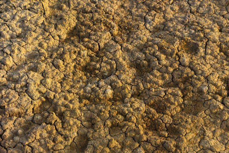 Tło, tekstura - pęknięcia na suchej ziemi obraz stock