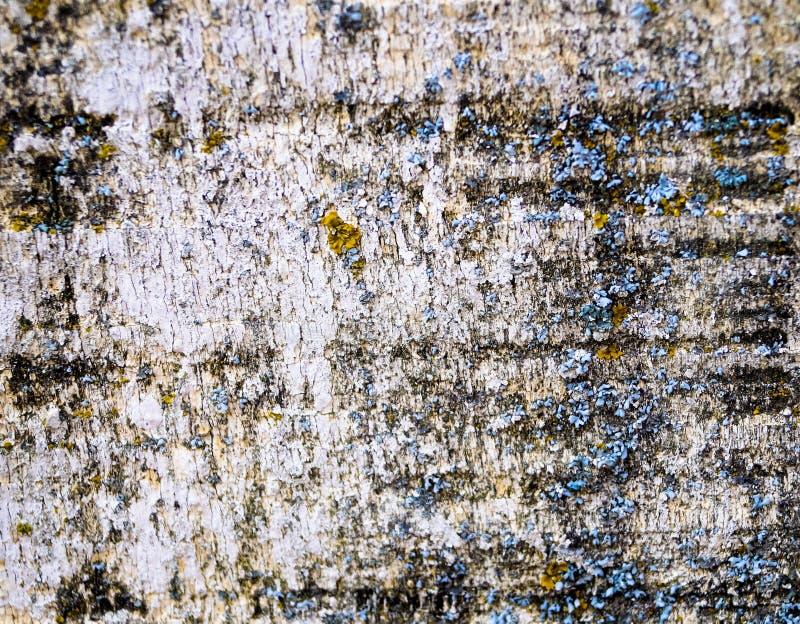 Tło tekstury błękitny tło na białej barkentynie drzewo zdjęcie royalty free