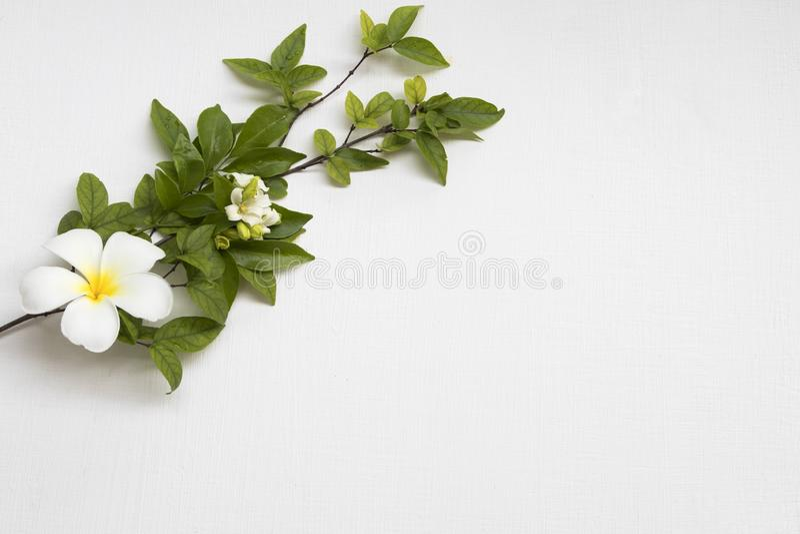 Tło tekstury natury biali kwiaty frangipani, jaśmin i liść, obrazy stock