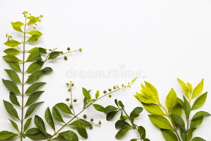 Tło tekstury natury liścia przygotowania mieszkania nieatutowa pocztówka obrazy royalty free