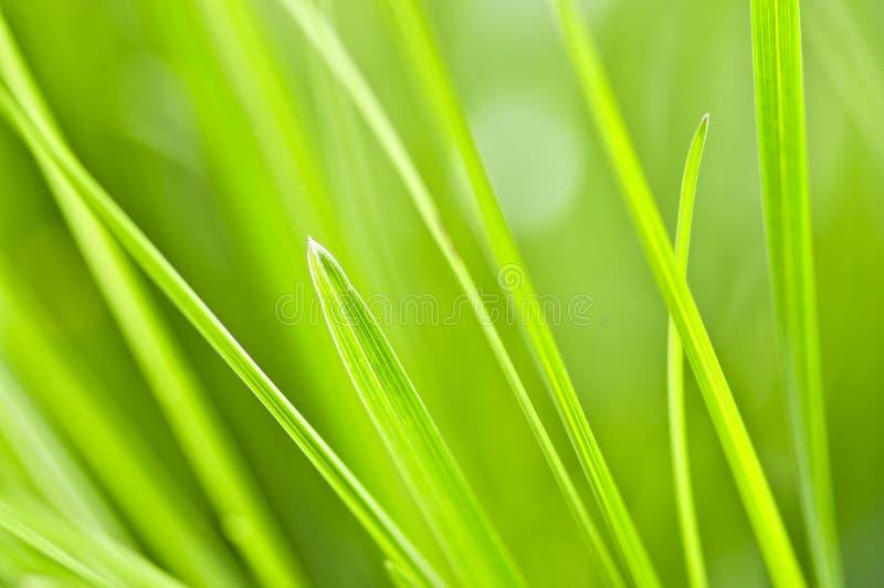 tło trawy zieleń zdjęcia stock