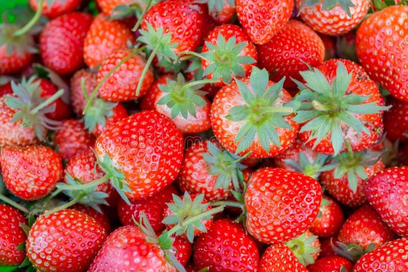 Tło truskawek czerwone owoc, odgórny widok obraz royalty free