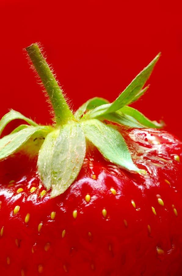 tło truskawka zamknięta czerwona dojrzała dojrzały obraz royalty free