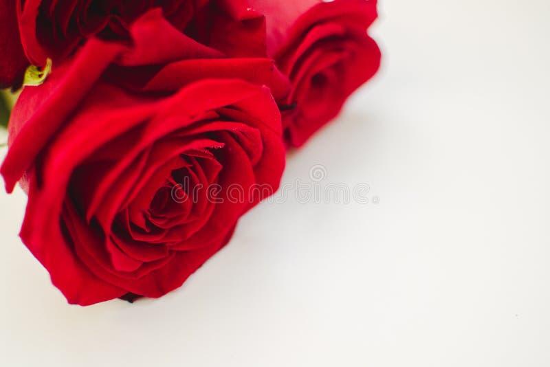 Tło Walentynki, urodziny, ślub Czerwone róże z kroplami wody na płatkach zdjęcie stock