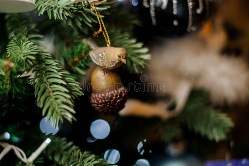 Tło wiecznozielony jedlinowy drzewo z małym brązu acorn z ptak zabawką zdjęcie stock