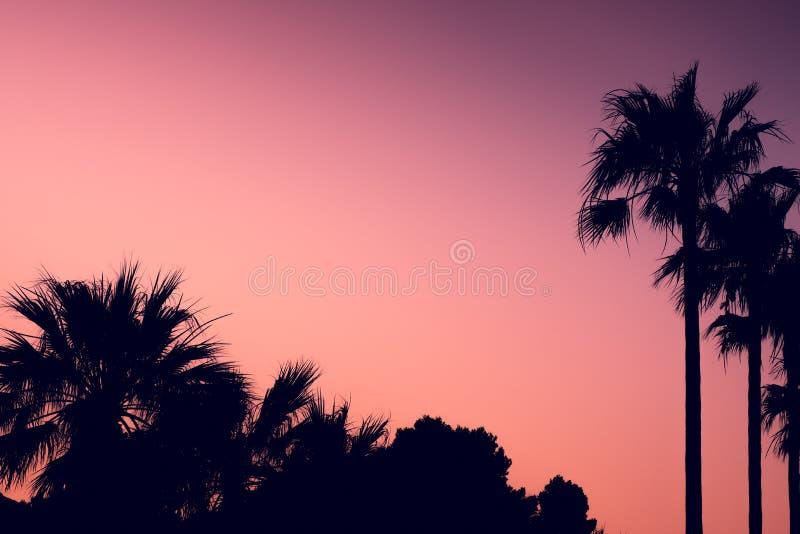 Tło wizerunek Śródziemnomorscy drzewka palmowe przy zmierzchem Z policjantem zdjęcia royalty free