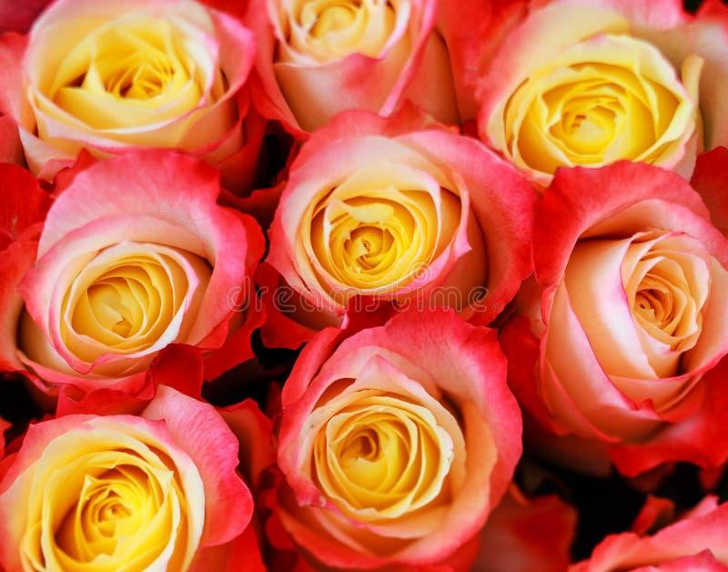 Tło wizerunek czerwone róże fotografia royalty free