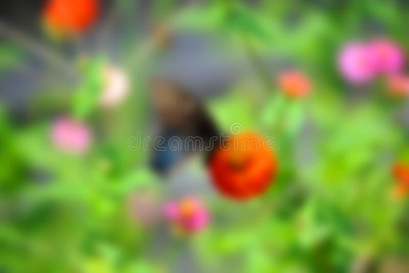 Tło wizerunek motyl na kwiatach zdjęcia stock