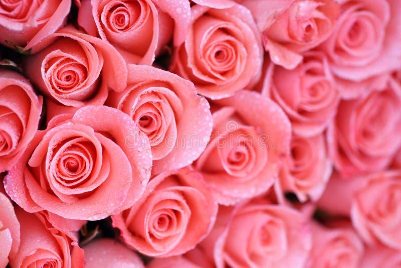 Tło wizerunek różowe róże obrazy stock