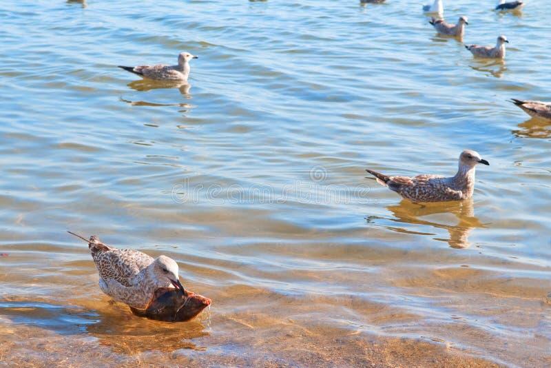 Tło wodne z mewami i rybami zdjęcie royalty free