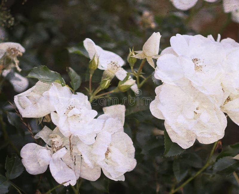 TÅ'o wsteczne z piÄ™knym kwiatkiem i starÄ… teksturÄ… papieru obrazy royalty free
