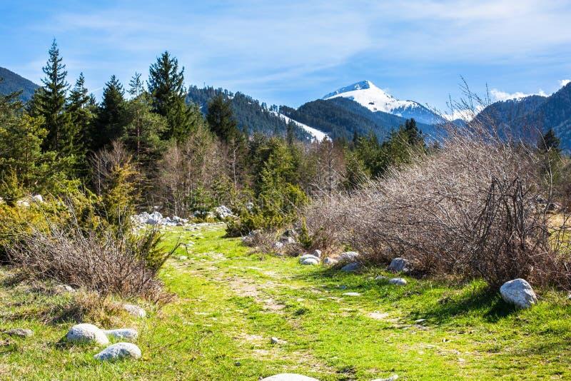 Tło z śnieżnymi górami, zieleni wiosen drzewa obraz royalty free